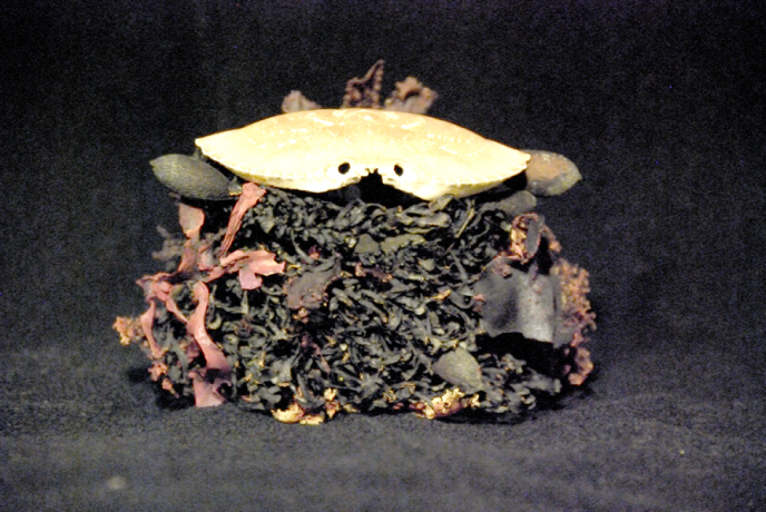 Crab Box B front, small
